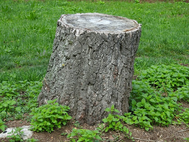 tree stump removal Adelaide